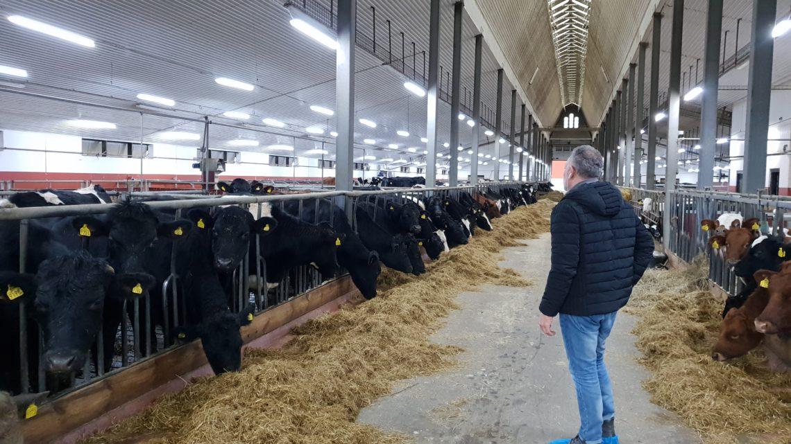 Meltron får ett nytt projekt med stallbelysning i Österrike.